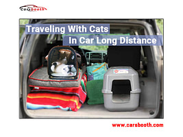 How to Travel with Cats in a Car Long Distance